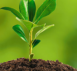 Laziale Derattizazione per la cura dell'ambiente